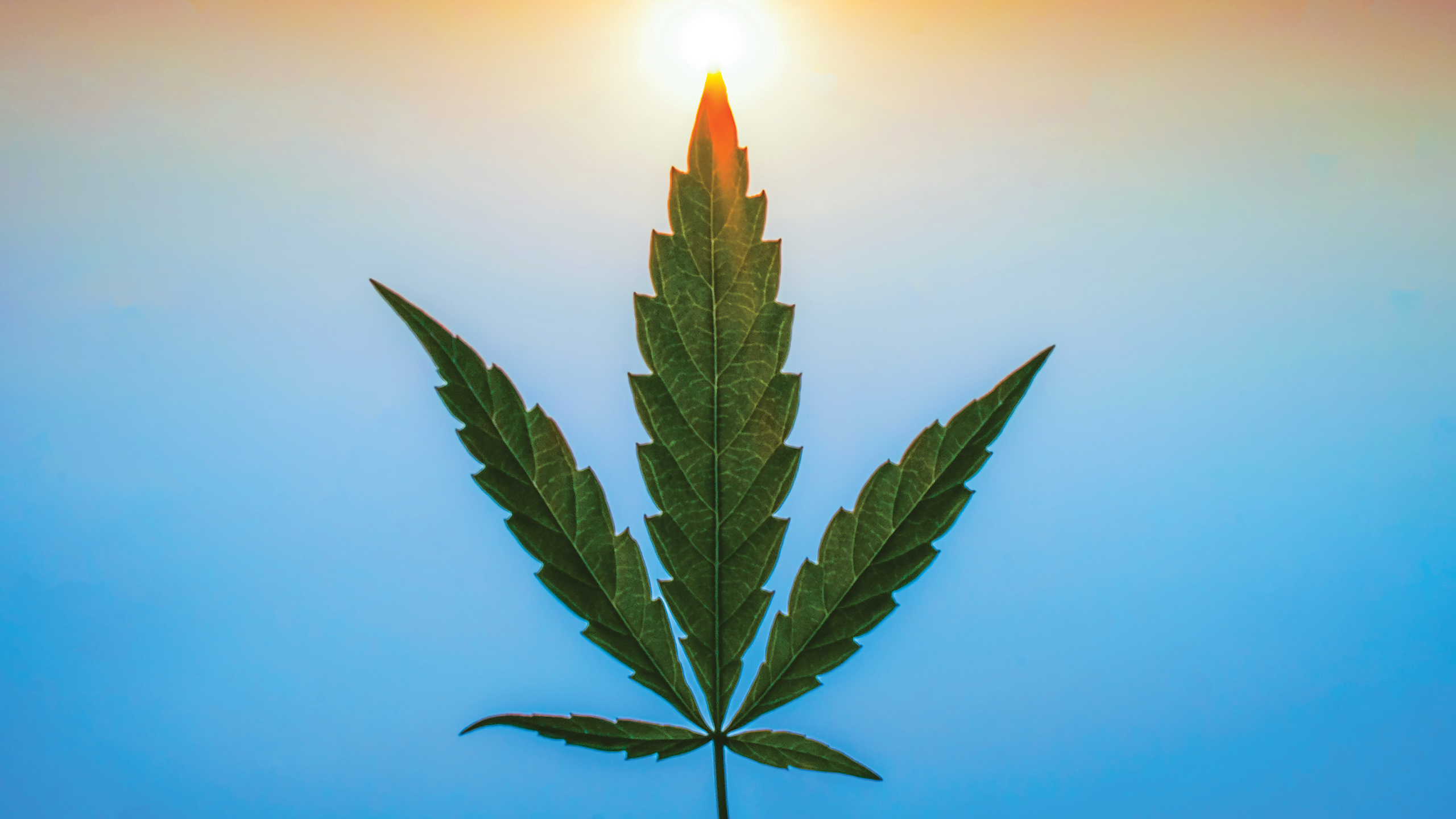Estate Planning for Mary Jane and Other Marijuana Users